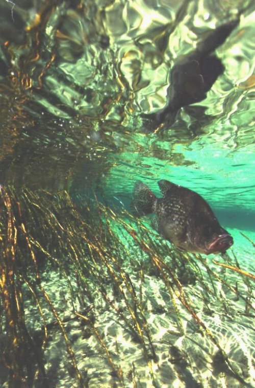 Night Hawk Masters 39 Secrets Of Crappie Fishing Chapter 2