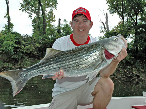 Pickwick dam tennessee heaven for fishermen with roger for Pickwick lake fishing report