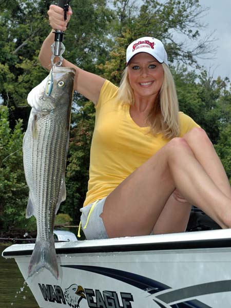 ... the striper fight 477 x 732 20 kb jpeg dam fishing reports http www