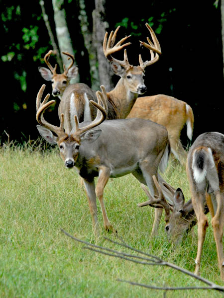 Image result for hunting in south carolina