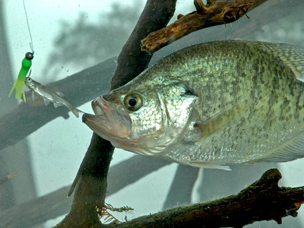 The five best november and december bass and crappie hot for Lake guntersville fishing hot spots