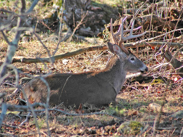 How To Hunt When Deer Become Nocturnal