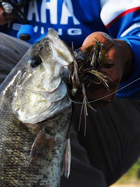 Test your bass fishing iq with outdoor writer john e phillips for When is the best time to fish for bass
