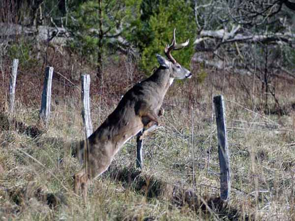 How to Find a Deer (How to...)