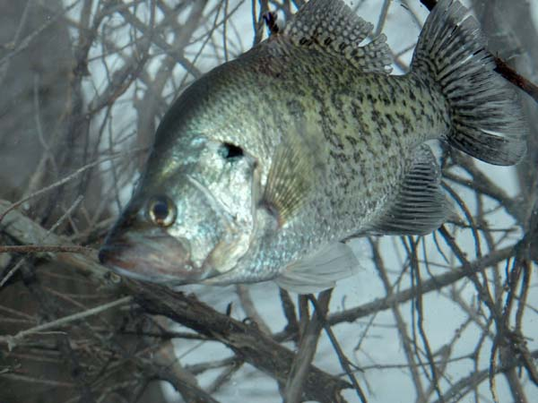 Wake up to 2 00 am cold weather crappie fishing at alabama for Crappie fishing in alabama