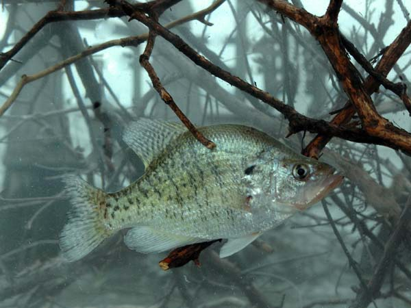Hot Weather Crappie Fishing