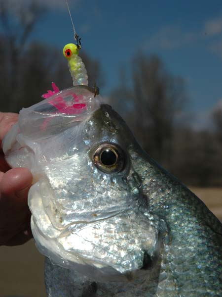 grenada lake mississippi fishing regulations