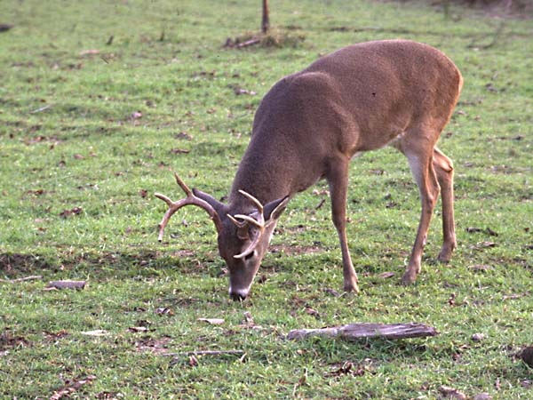 the ultimate year round food plot for deer