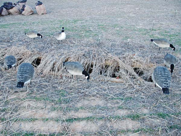 Resident-Goose Hunting in Maryland with Jeff Kreit